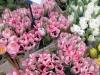 tulipes-du-marche-jpg