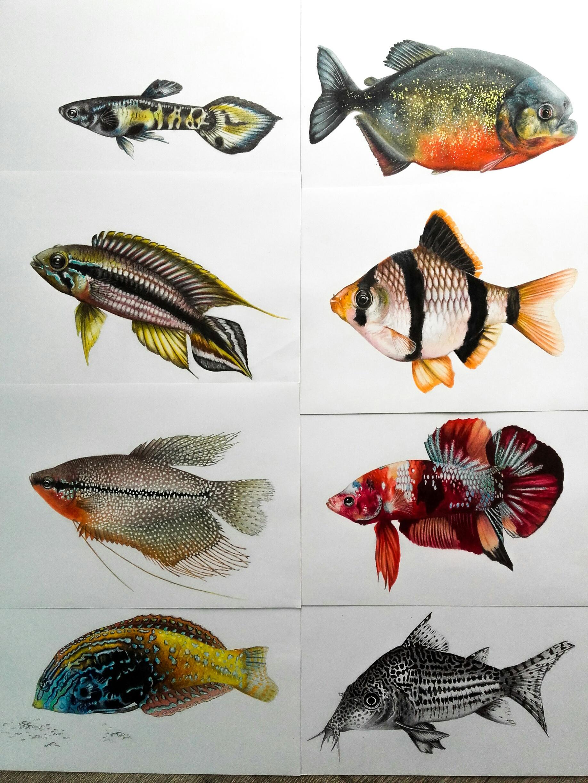 plusieurs poissons