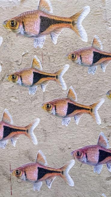 poissons orange et noir jb coda